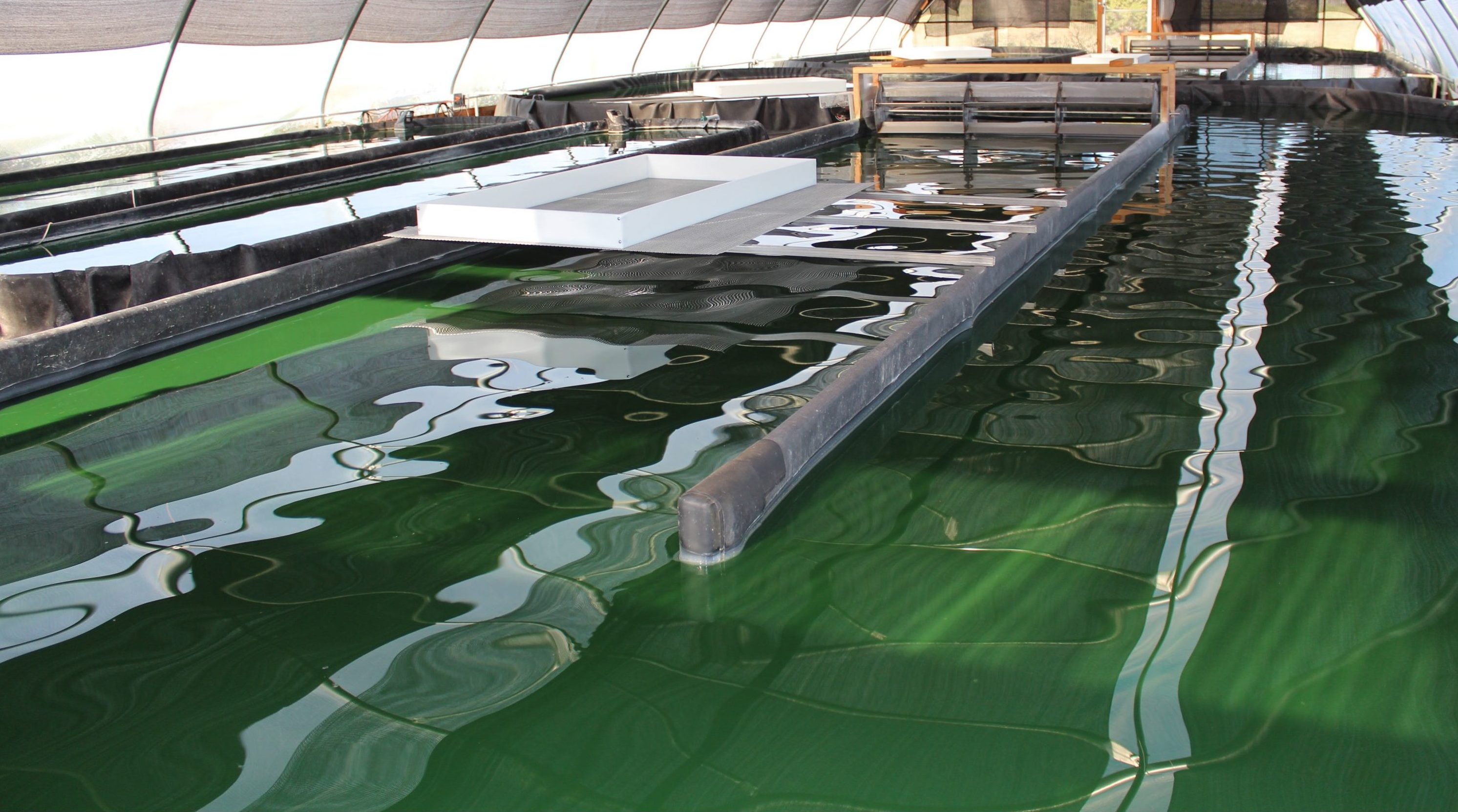 Apogee Spirulina Farm in Santa Fe, New Mexico